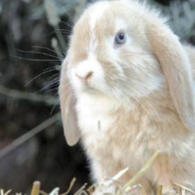 Kaninchen langsam an frisches Gras gewöhnen