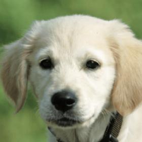 Tierarzt-Besuch: Welpen spielerisch heranführen