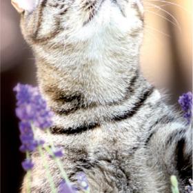 Katze: Beim Schmusen auf Wunden achten!