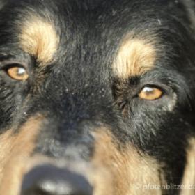 Magendrehung bei Hunden, Impfung für Kaninchen und Zucker bei Katzen