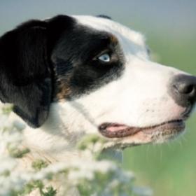 Milben im Gras, Tumore unter der Haut und haarende Kaninchen