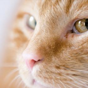 Übergewicht bei Haustieren, Tränen und Bewegung bei Hunden und Katzen