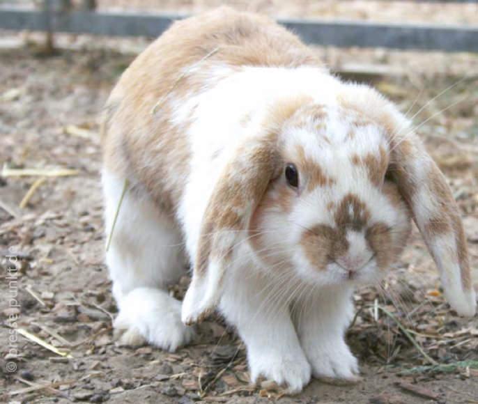 News-Dezember-Kaninchen