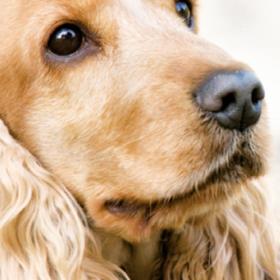 Leberkrankheiten, Husten bei Hunden und Zahnpflege für die Katze