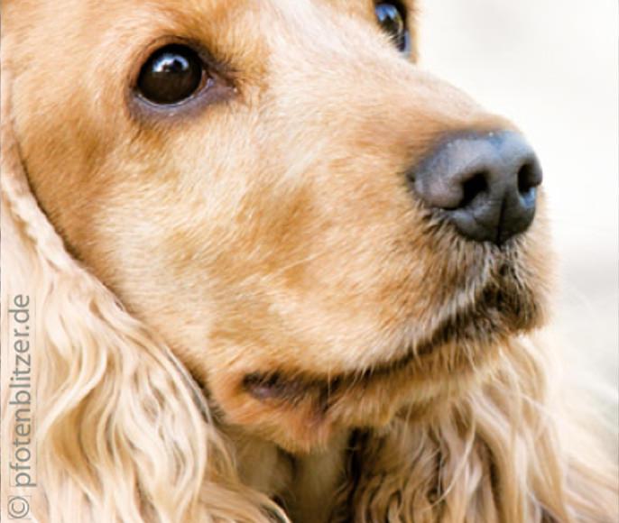News-November-Hunde