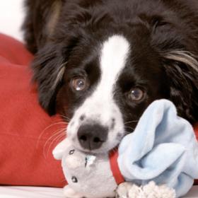 Regelmäßige Tierarztbesuche, Registrierung von Haustieren und Zahnwechsel beim Hund