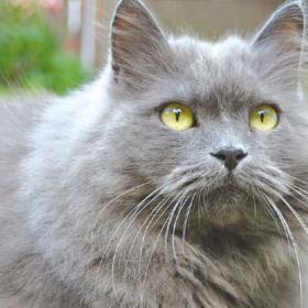 Verstopfung bei Katzen, Hasen- oder Nagerpest und Frischfutter für Kaninchen!