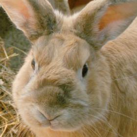 Polypen bei Katzen, Tierische Erkältungen und Impfzeit für Kaninchen
