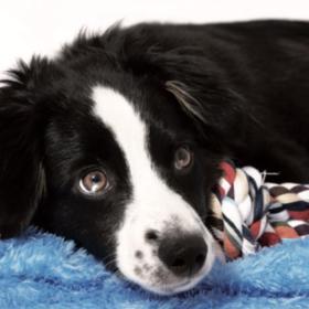 Arthrose und Fellwechsel beim Hund
