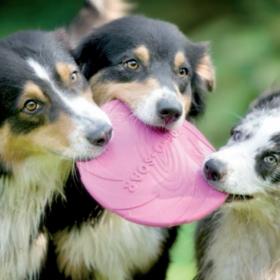 Regelmäßige Entwurmung bei Hunden, Schilddrüsenüberfunktion bei Katzen und Kortisonbehandlung bei Tieren